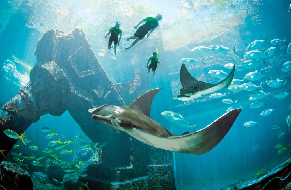 Atlantis Snorkeling.jpg